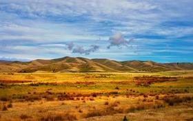 Обои поля, сельская местность, овцы, фермы, забор, стадо, холмы