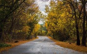 Обои листья, лес, осень, деревья, дорога