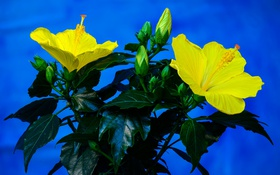 Картинка листья, природа, растение, лепестки