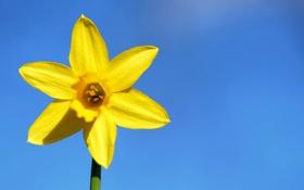 Обои стебель, цветок, лепестки, небо