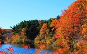 Обои река, деревья, небо, осень