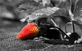 Картинка фон, клубника, ягода