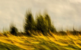 Обои желтый, небо, голубой, подсолнухи, деревья, движение, природа