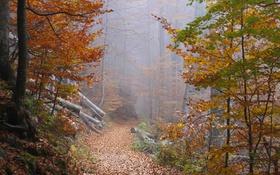 Обои осень, лес, листья, деревья, туман, путь, дерево