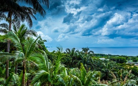 Обои небо, облака, пейзаж, пальмы, Japan, Okinawa