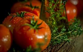 Картинка капли, зелень, помидоры
