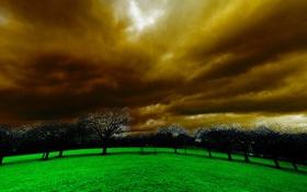 Обои небо, деревья, пейзаж, тучи, природа