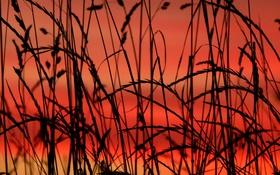 Обои трава, макро, растение, силуэт, зарево