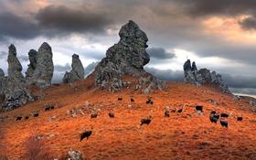 Обои осень, животные, трава, горы, тучи, скалы, Италия