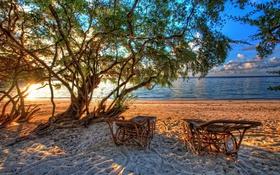 Обои beach, trees, sand