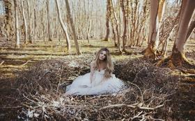 Картинка лес, девушка, платье, гнездо