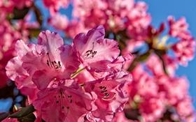 Обои небо, природа, лепестки, сад, соцветие