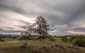 Картинка природа, поле, дерево