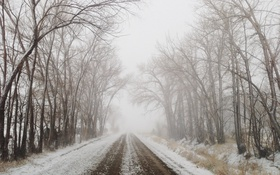 Обои road, trees, winter, fog, branches