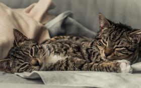 Картинка коты, котята, парочка
