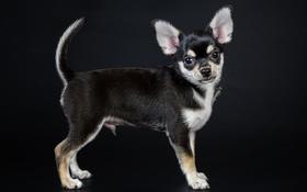 Картинка look, the dog, friend, друг, puppy, щенок, взгляд