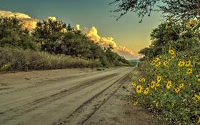 Картинка дорога, небо, трава, облака, цветы, кусты