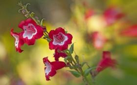 Картинка краски, растение, лепестки, стебель, соцветие