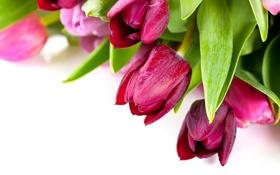 Обои цветы, весна, colorful, тюльпаны, красочные, flowers, beautiful