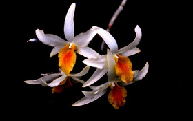 Обои лепестки, ветка, растение, природа, цветок