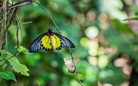 Обои крылышки, бабочка, веточка, макро