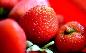 Обои размытость, клубничка, ягода
