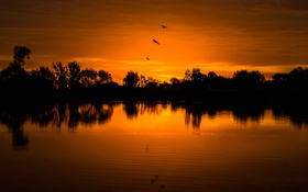 Обои США, деревья, силуэт, Колорадо, озеро, птицы