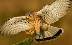 Обои птица, крылья, перья, клюв, посадка