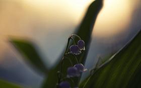 Обои цветок, макро, природа