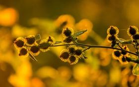 Обои свет, закат, природа, растение, паутина, сорняк