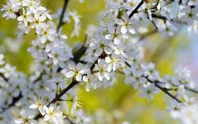 Обои дерево, ветка, весна, лепестки, сад, тычинки