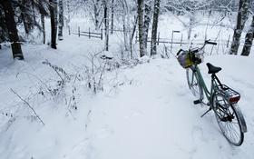 Обои Велосипед, прогулка, зимний лес
