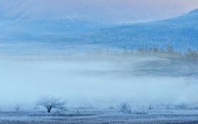 Обои долина, туман, горы, деревья, трава, иней