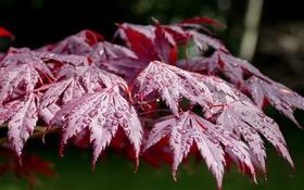 Обои макро, вода, природа, день, капли, листья