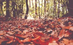 Картинка осень, лес, листья, солнечный свет