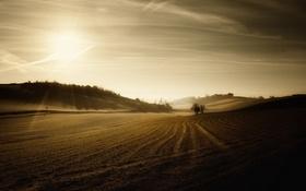 Картинка пейзаж, поле, утро