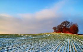 Картинка поле, снег, деревья, природа, холм
