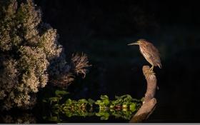 Картинка вода, свет, ночь, дерево, птица, ветка