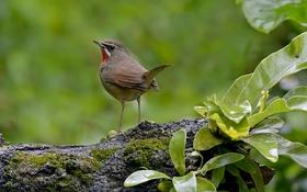 Обои листья, дерево, птица, перья, клюв, хвост