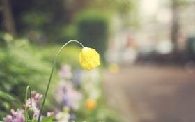 Картинка цветок, желтые, лепестки