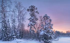 Обои закат, лес, деревья, зима, снег, вечер