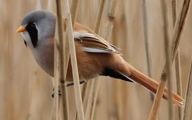 Обои природа, птица, цвет, растения, перья, стебель