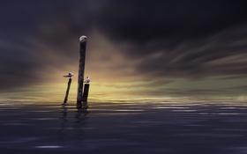 Картинка море, небо, птицы, ночь