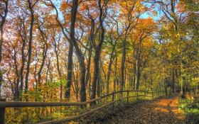 Обои лес, осень, небо, листья, дорожка, ограда, деревья