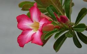 Картинка лепестки, растение, природа, листья, цветок