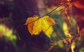 Картинка ветки, лист, кленовый