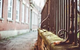 Обои осень, улица, забор, листок, ограда, сухой