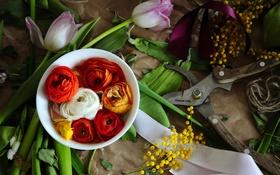 Обои секатор, тюльпаны, лютики, цветы