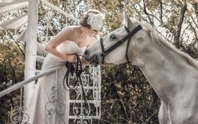 Картинка белый, конь, лошадь, азиатка, невеста