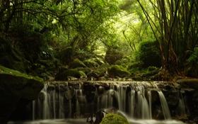 Обои лес, деревья, поток, бамбук, каскад